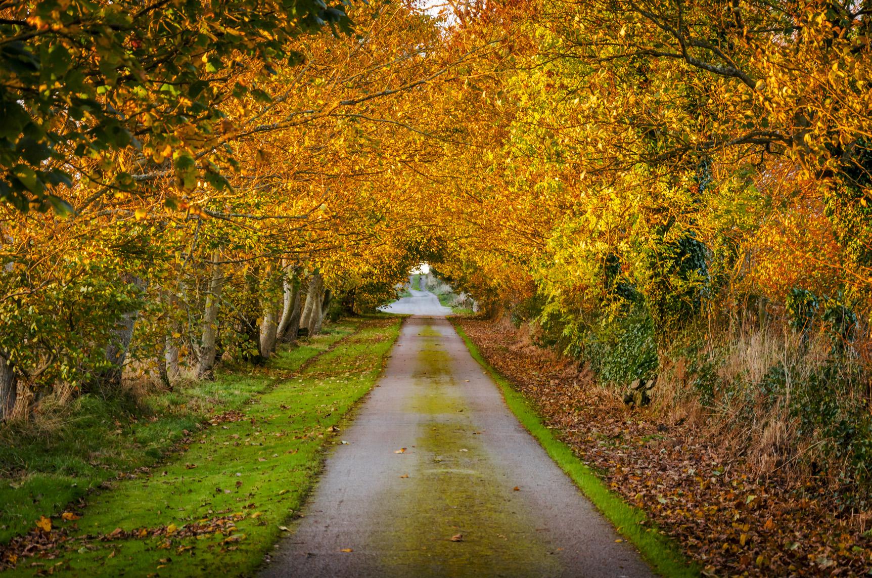 autumn_colours.jpg