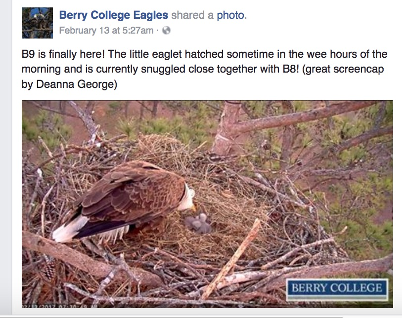 BerryCollegeEagleB9JoinsTheParty.jpg