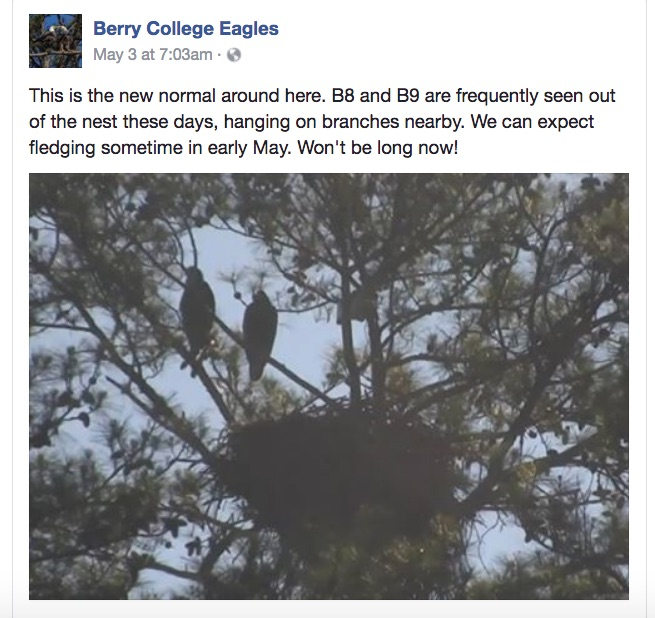 BerryCollegeEaglets2017GettingReadytoFly.jpg