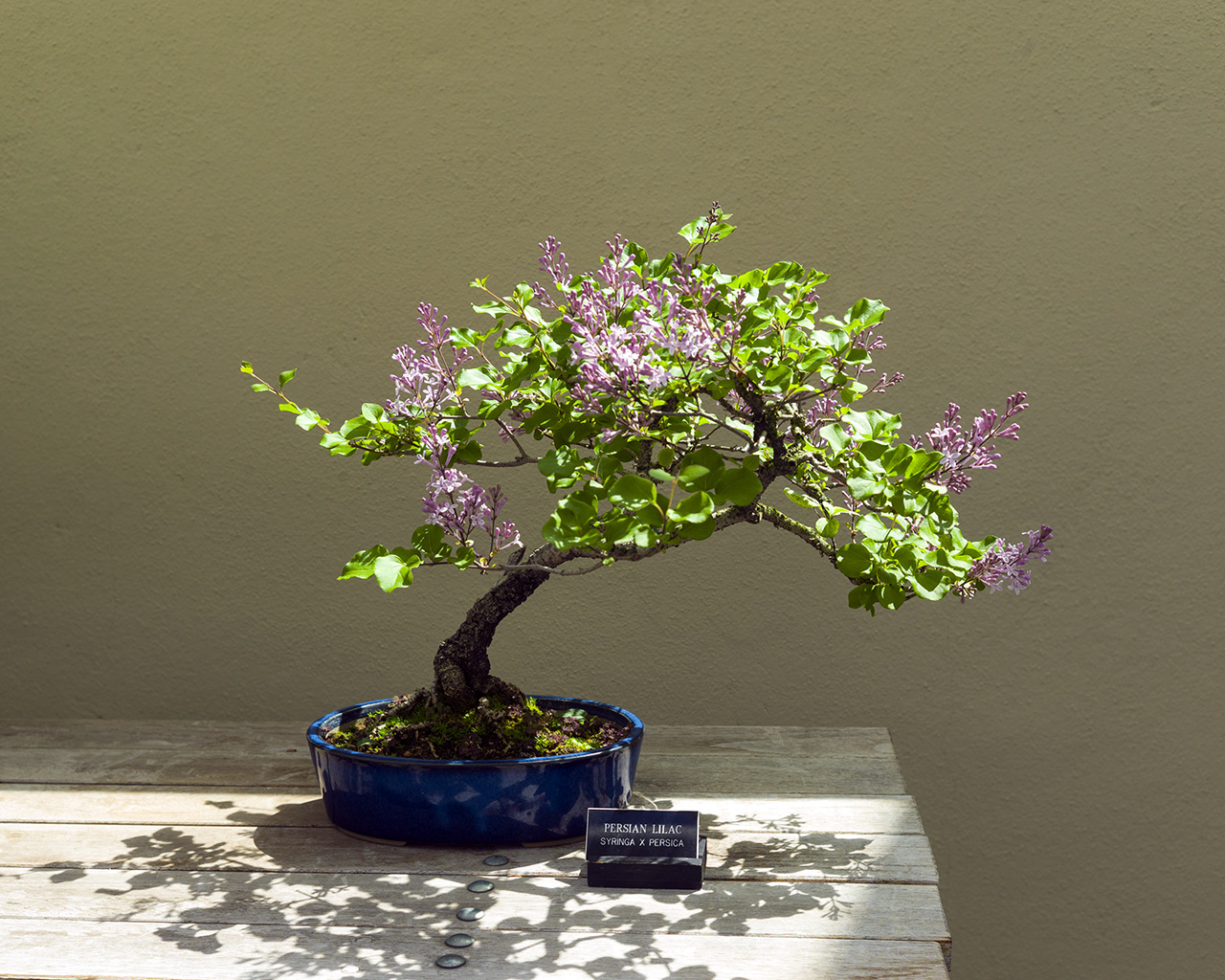 bonsai4crop1280.jpg