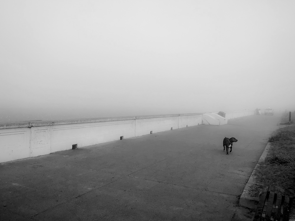 Dog at Ocean Beach BW.jpg
