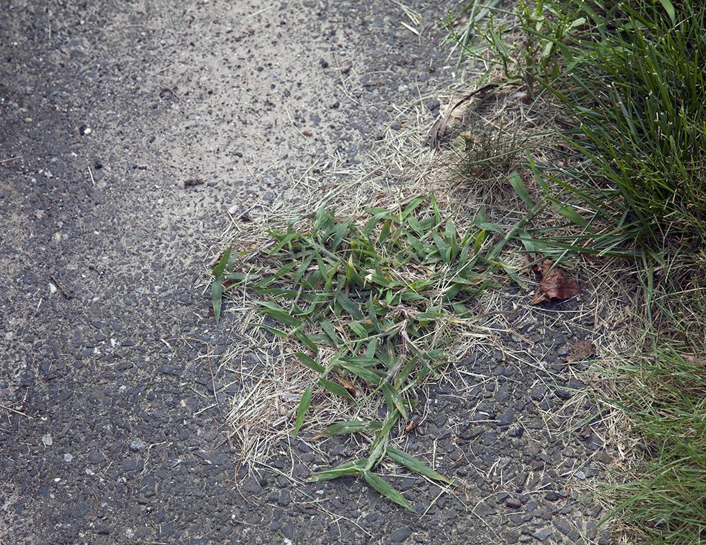 driveway21024.jpg