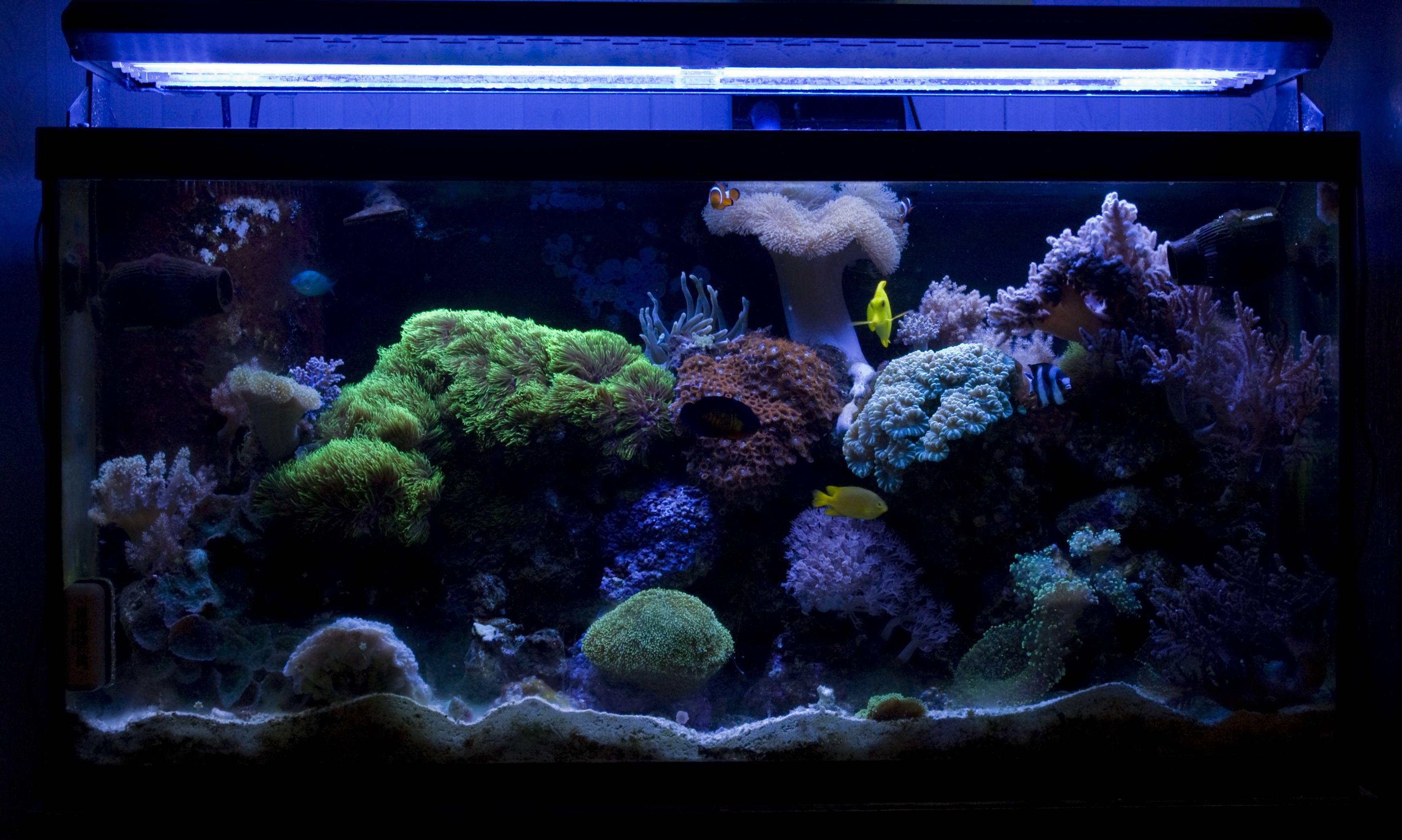 Fish aquarium jobs - Fish Tank Jpg