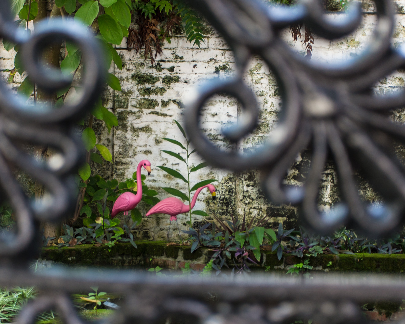 flamingo_garden (1 of 1).jpg