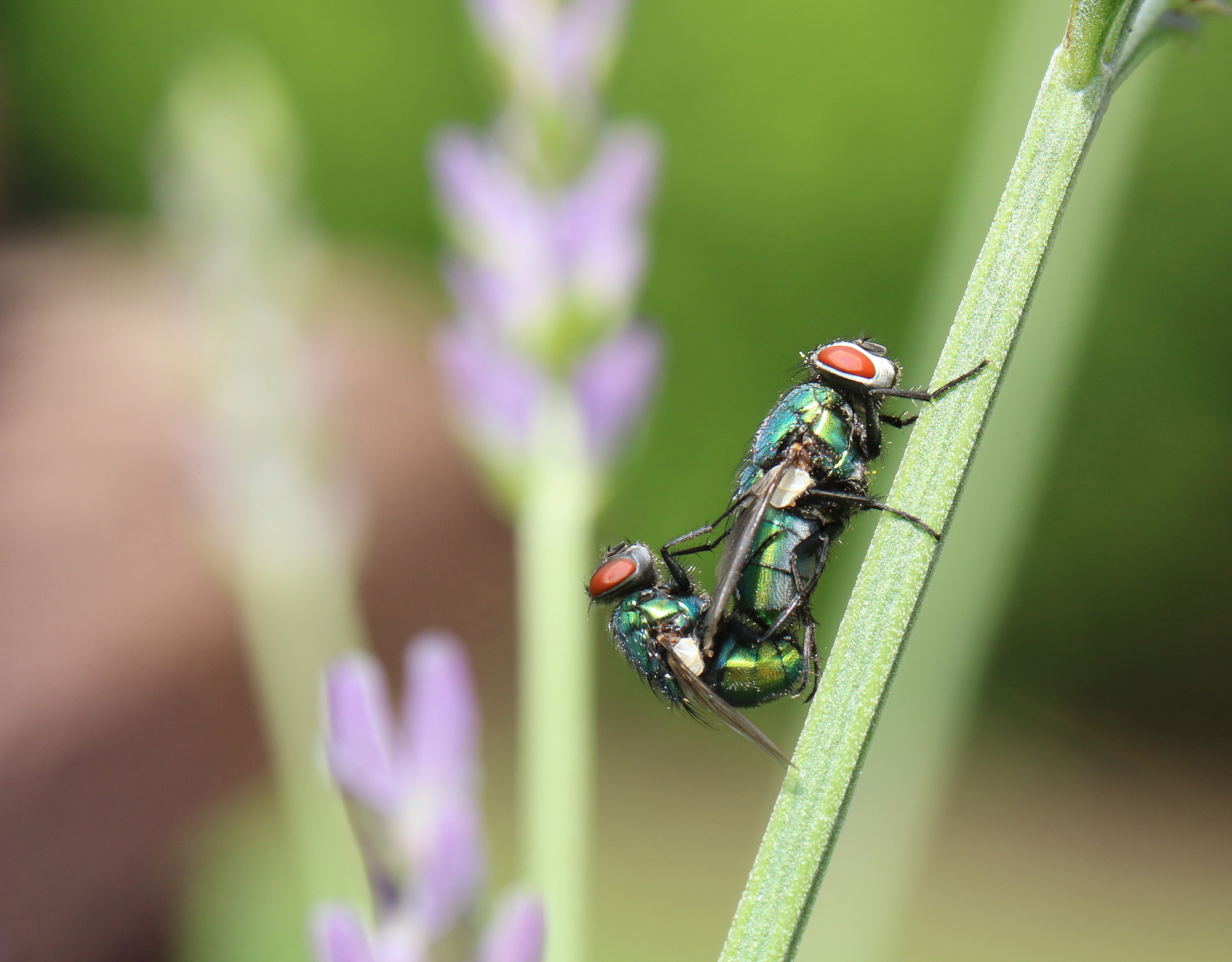 Flies having fun!.jpg