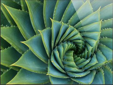 Ipad Green Lotusflower Macrumors Forums