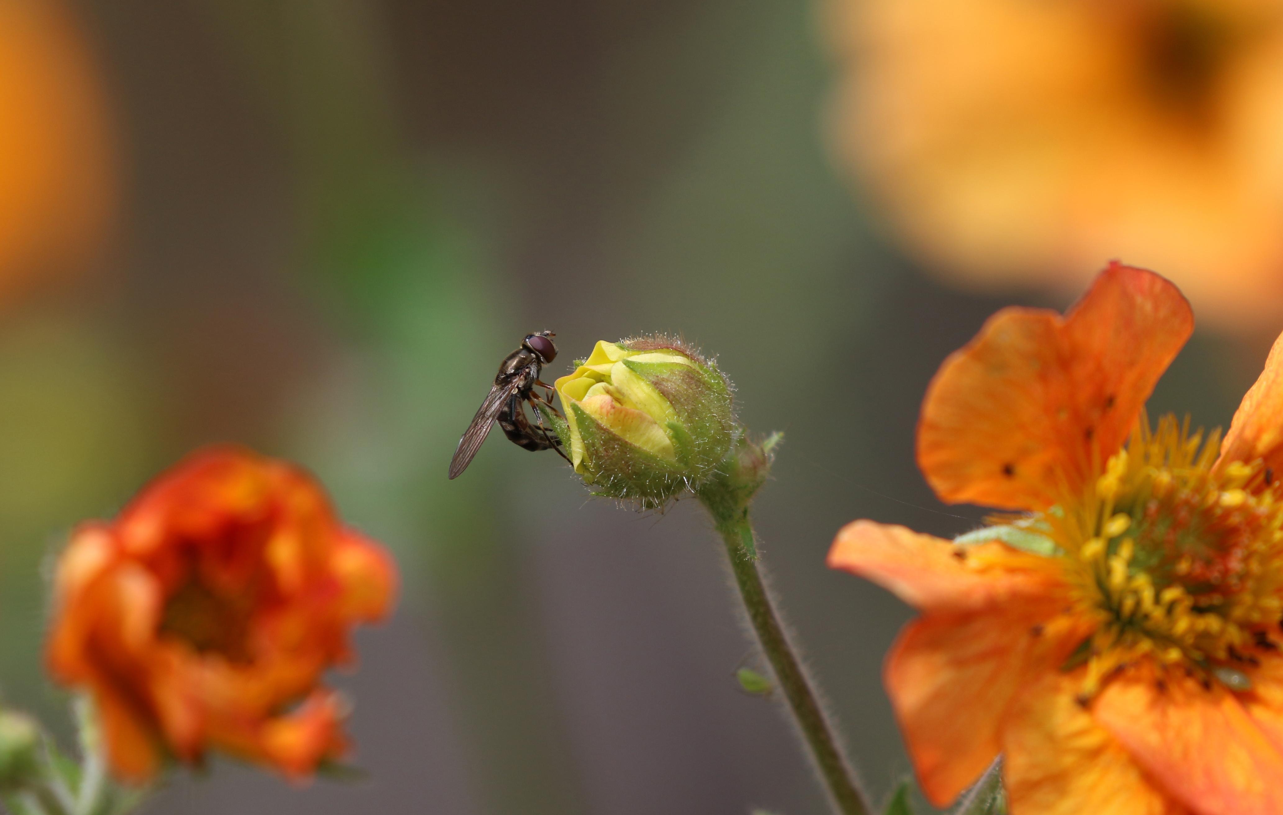 fly rosemr.jpg