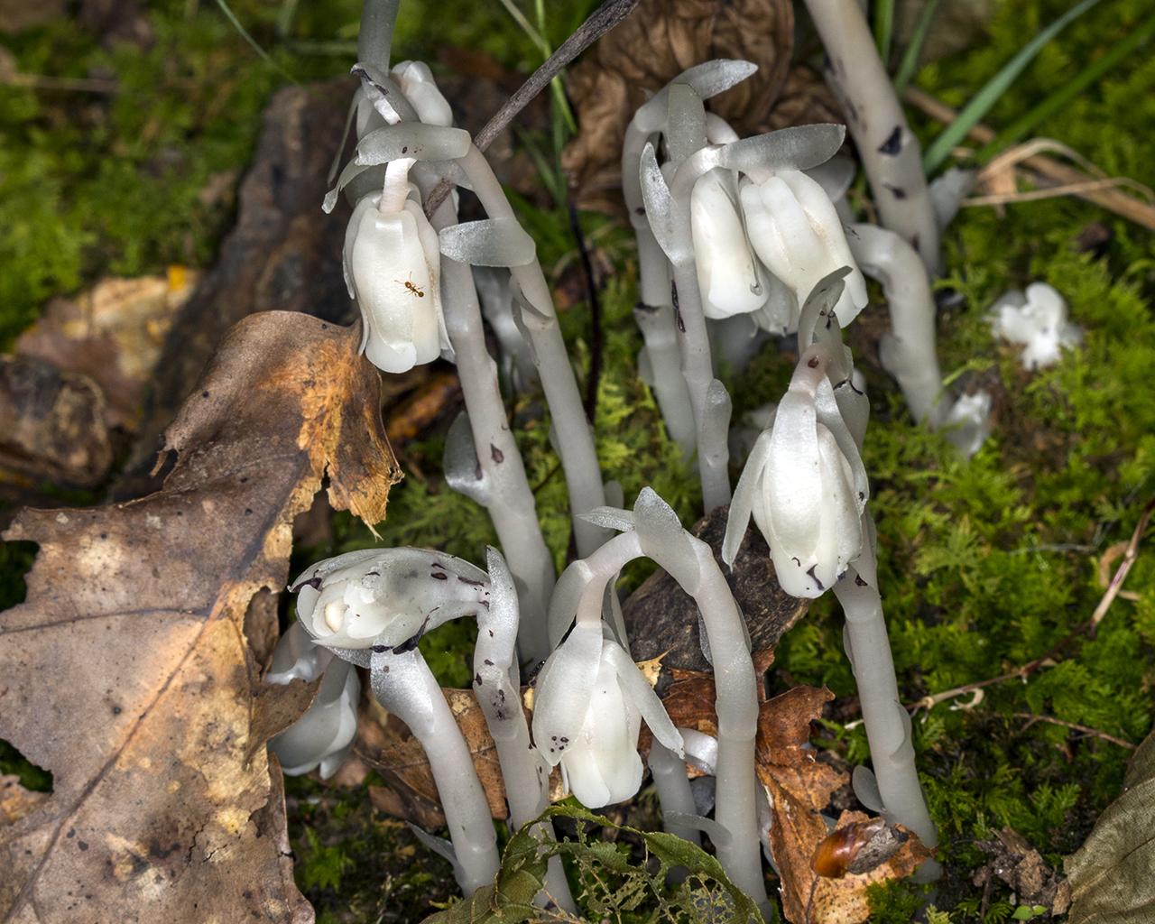 fungi11280.jpg