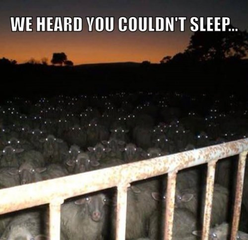 funny-pictures-heard-you-couldnt-sleep-sheep.jpg