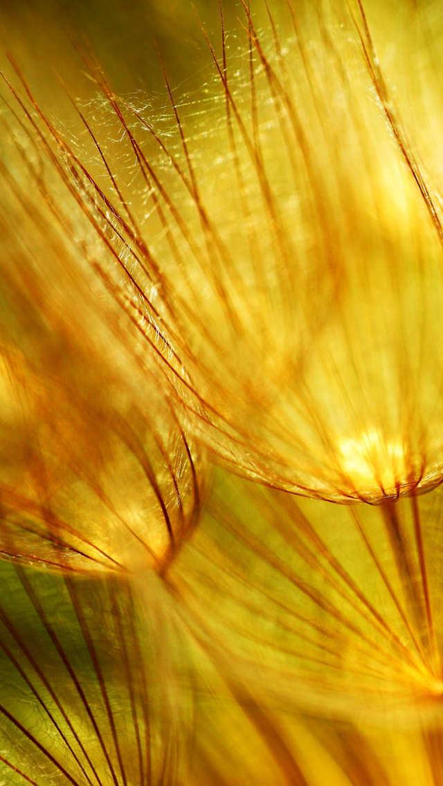 Golden Fluff Iphone 5 Wallpaper Ilikewallpaper Com