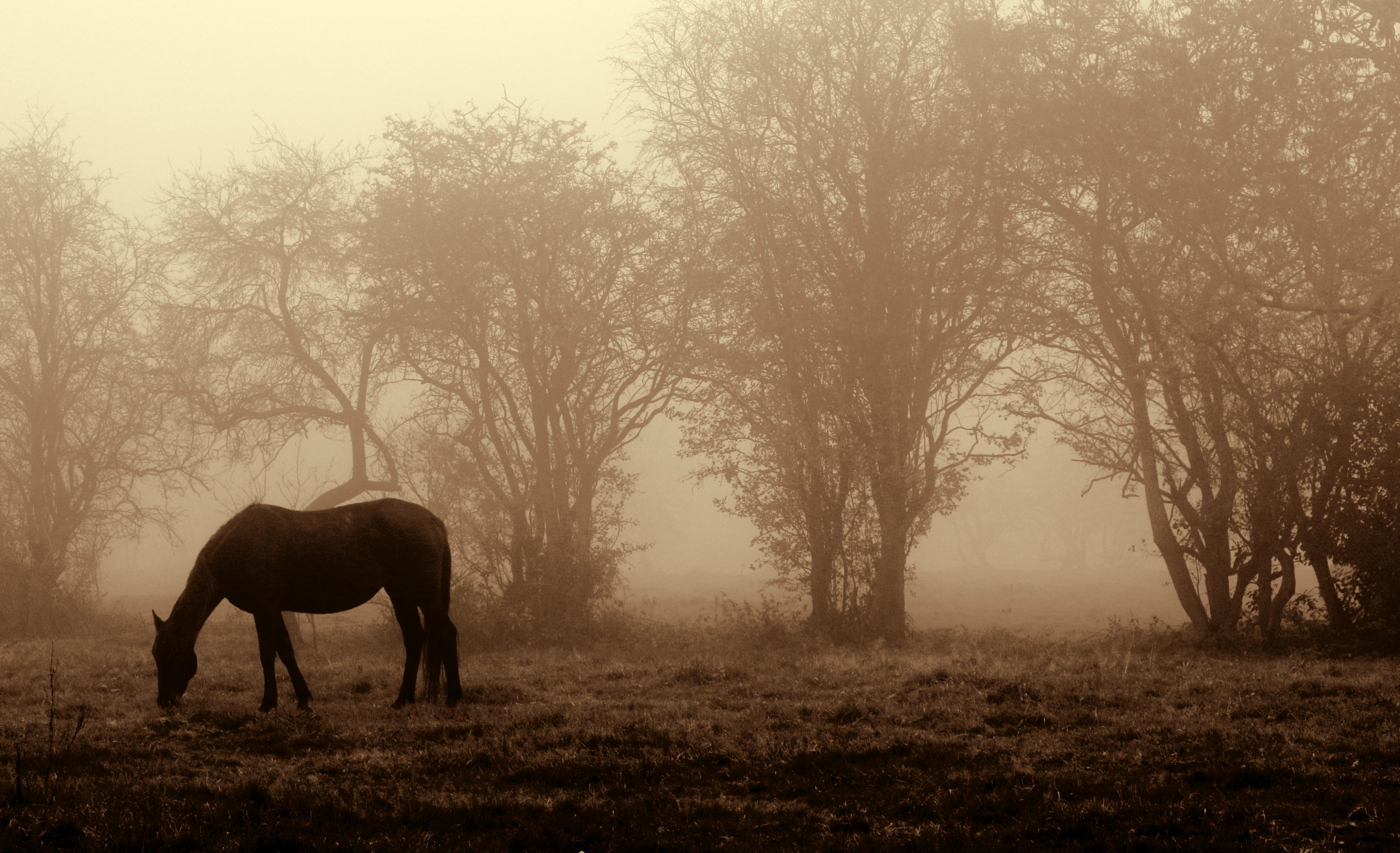 Horse in fog ph.jpg