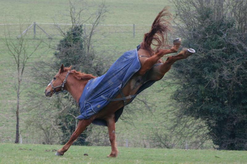 Horse rearing up.jpg