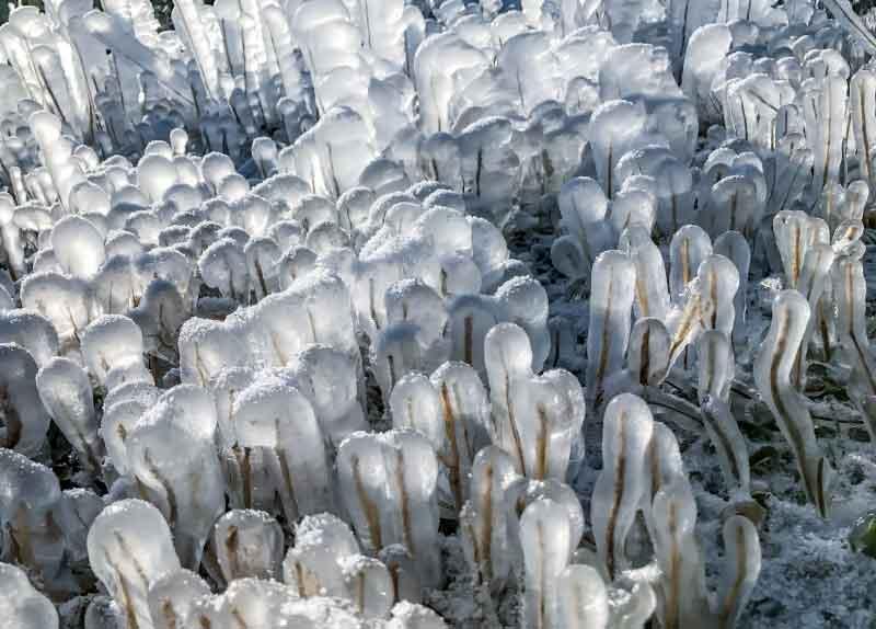 ice-pops.jpg