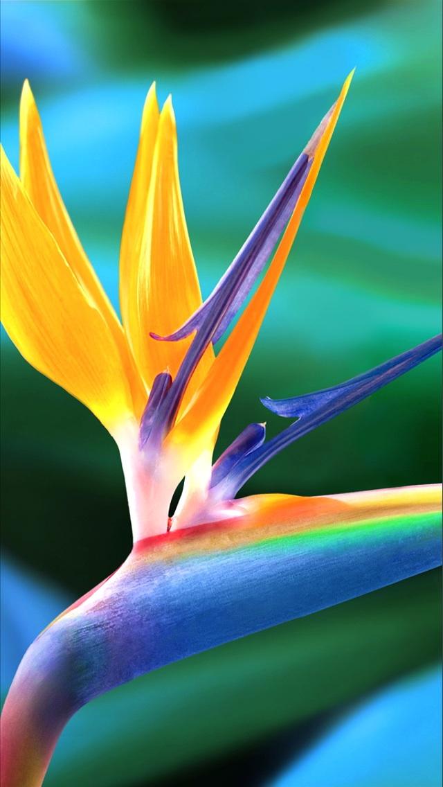 Birds Of Paradise Wallpaper For Desktop WallpaperYork Brows