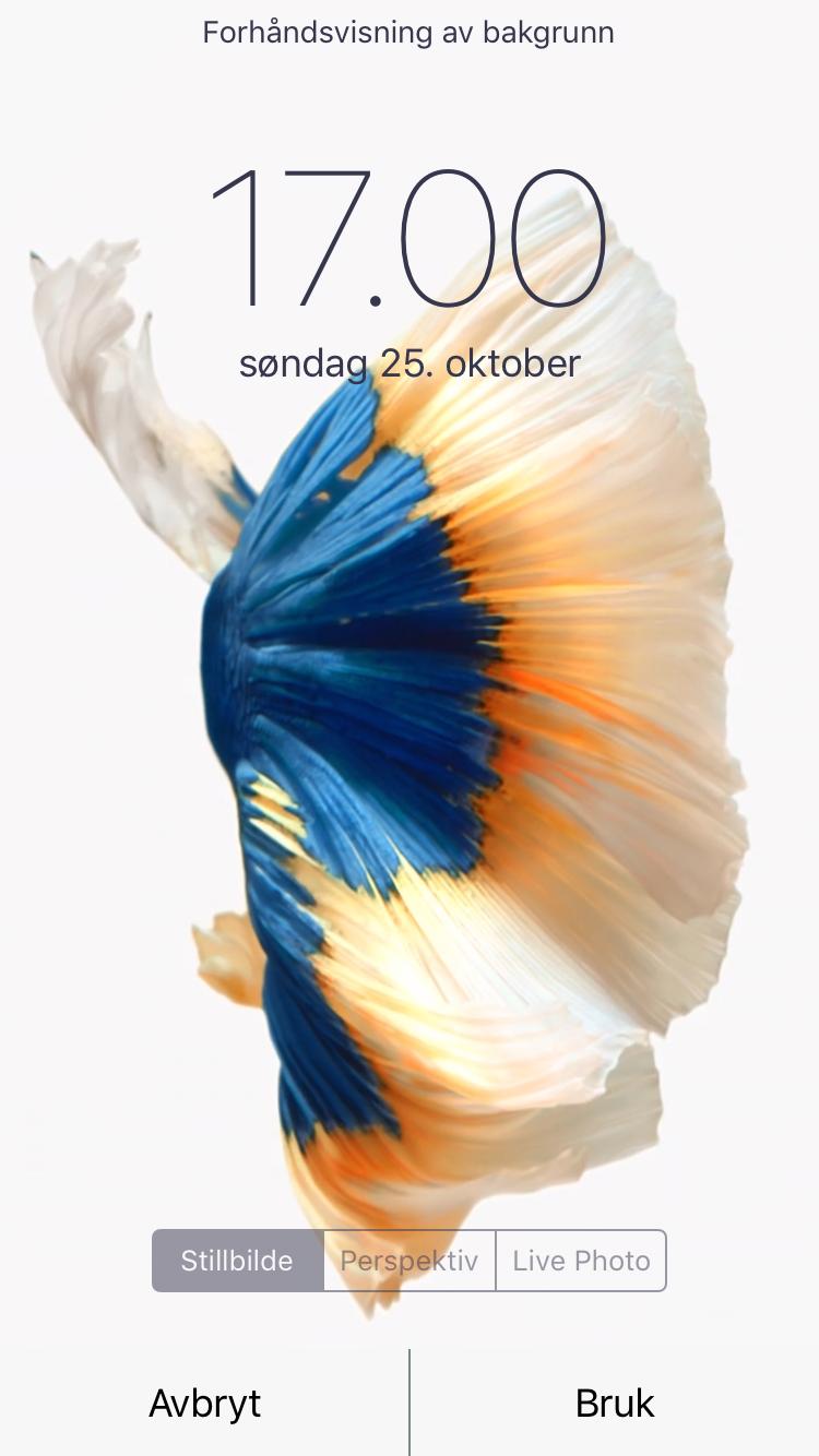 Wallpaper iphone fish - Png Img_0067 Png