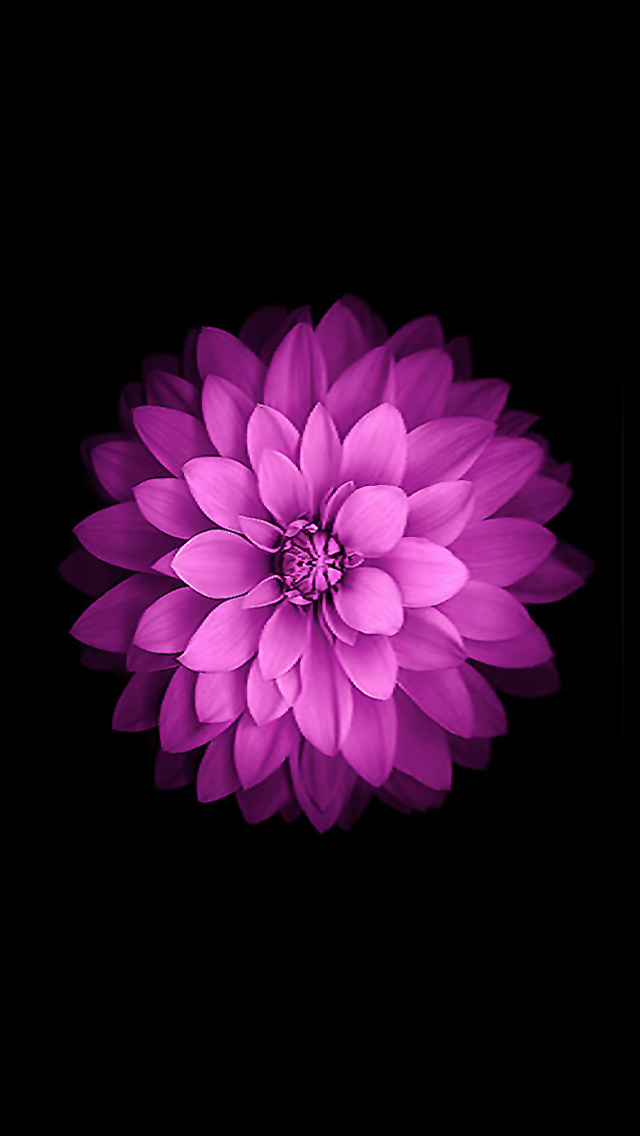 Iphone Iphone 6 Flower Wallpaper Macrumors Forums