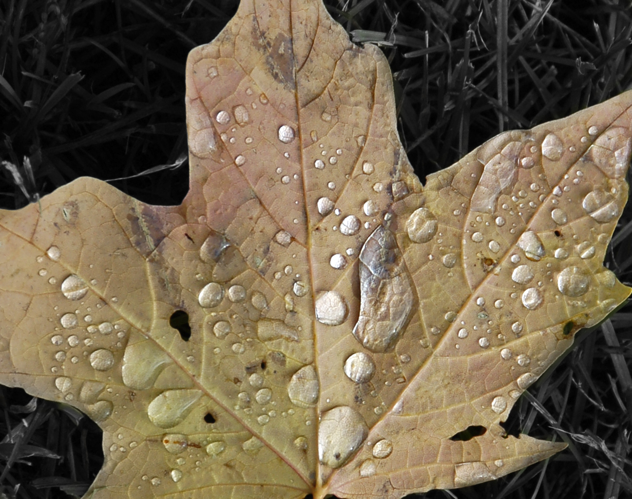 Leaf with disease.jpg