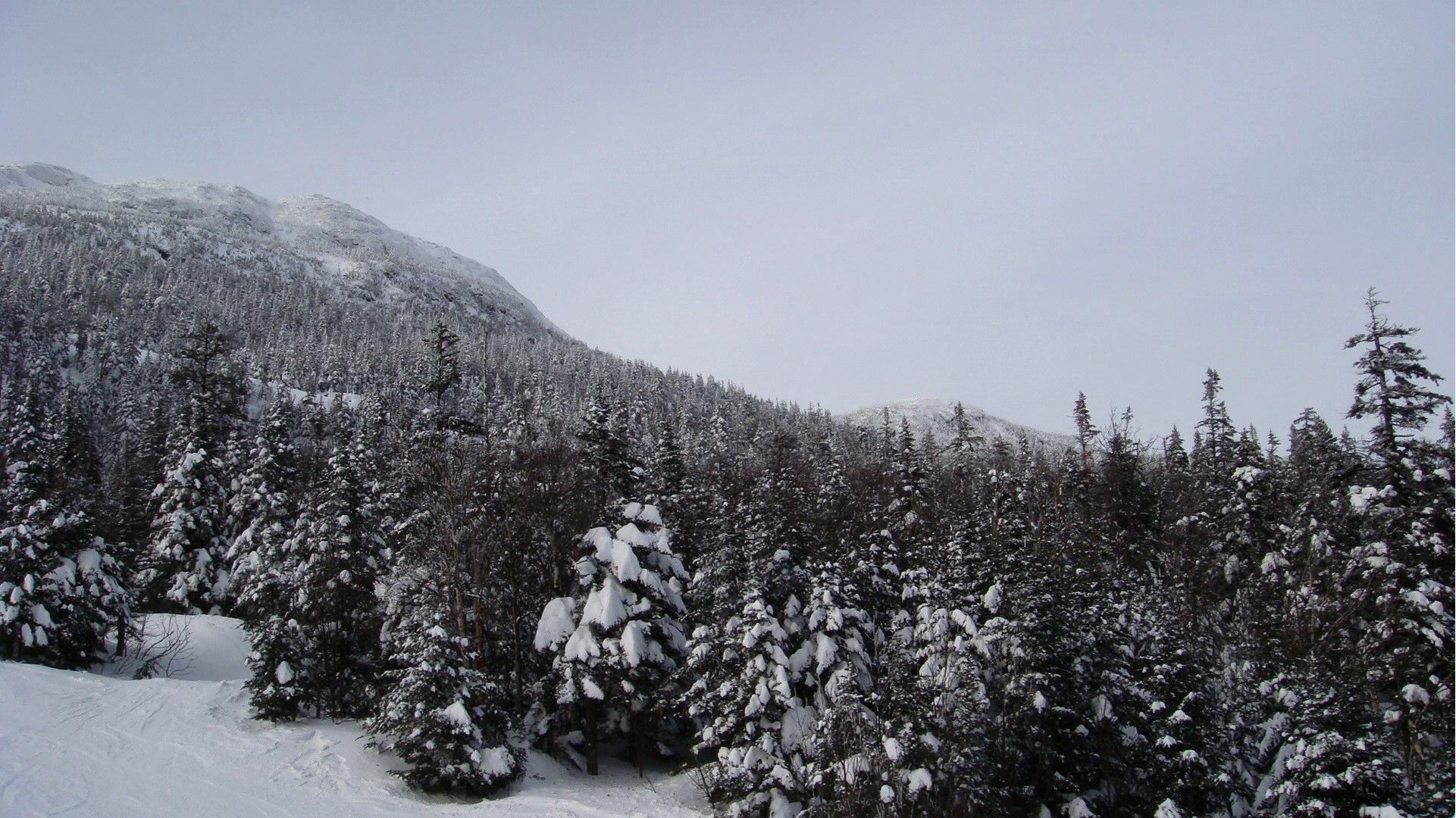 Snow Covered Trees.jpg