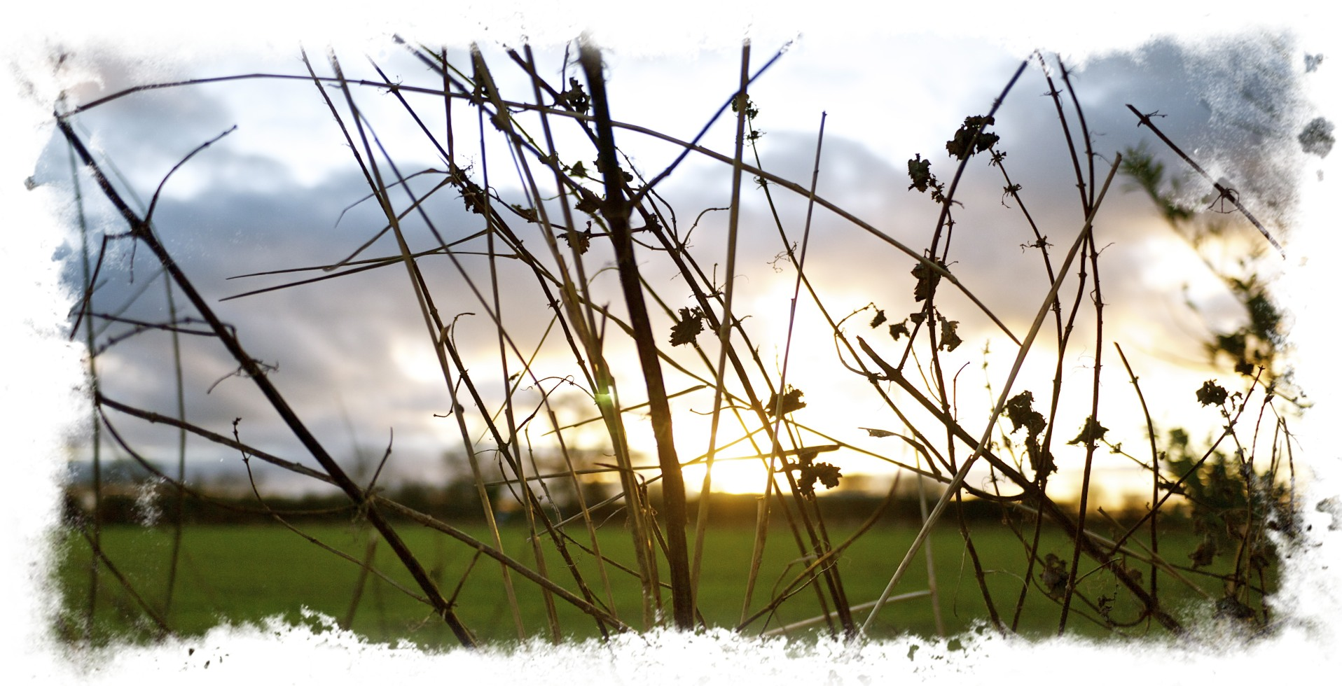Sunset Through Nettles.jpg