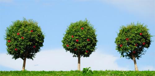 three-apple-trees.jpg