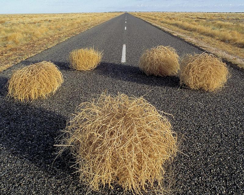 tumbleweed-roadkill_LRG.jpg