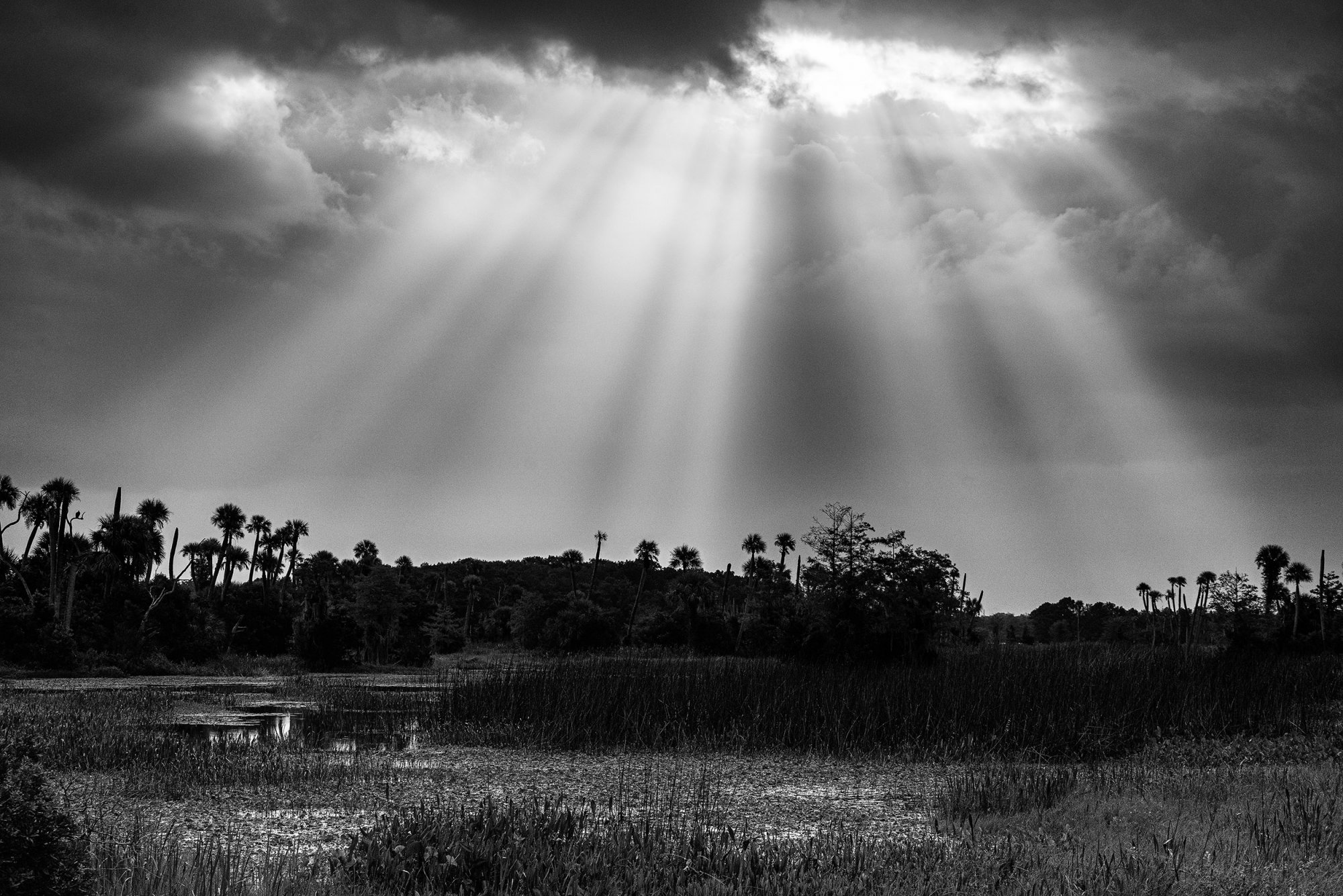 Wetlands 9-2020-9 B&W-2500px.jpg