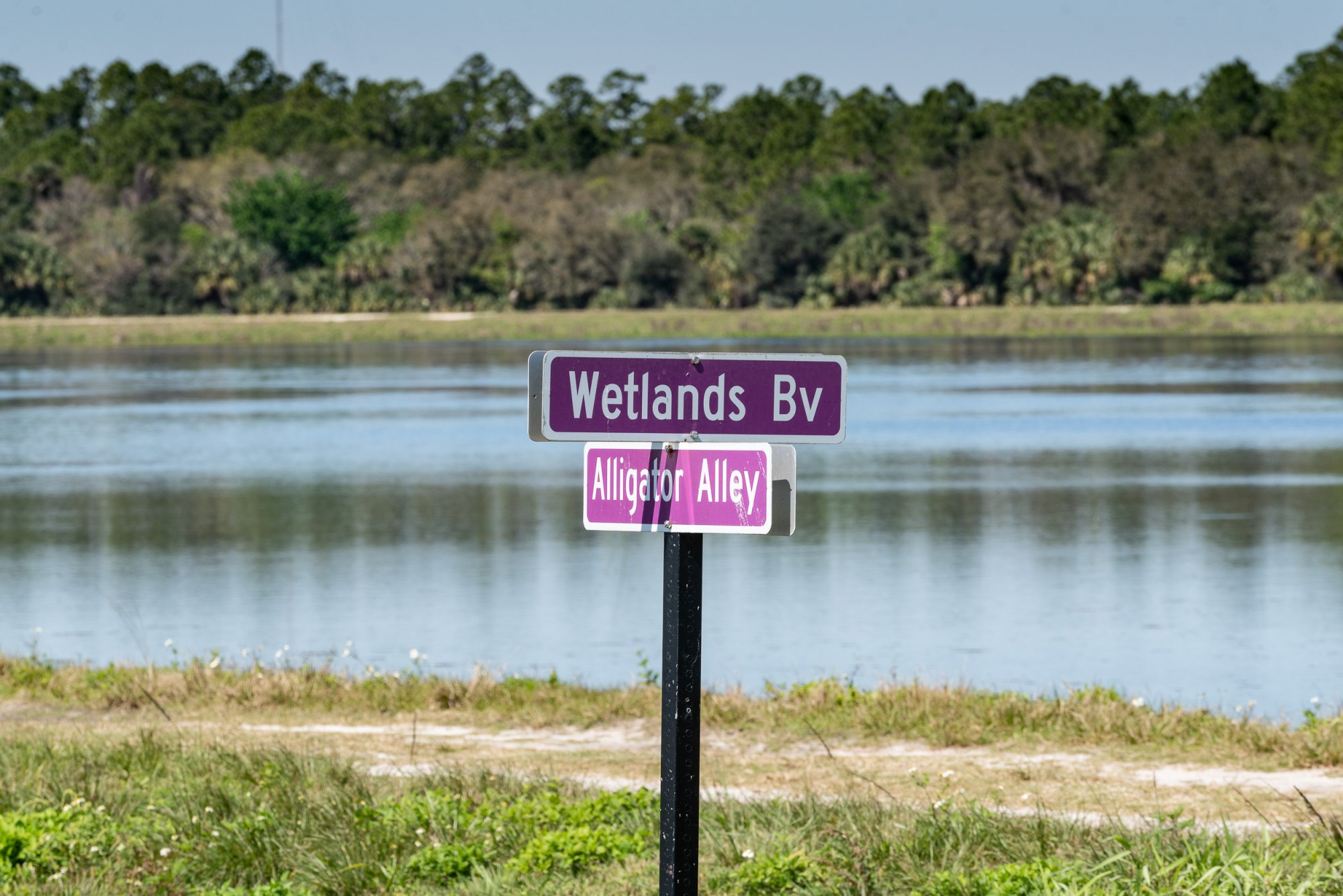 Wetlands Mar 2020-2500px-14.jpg