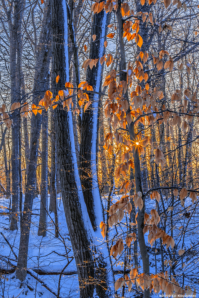 WinterIcedBeechLeavesSunBurst.jpg