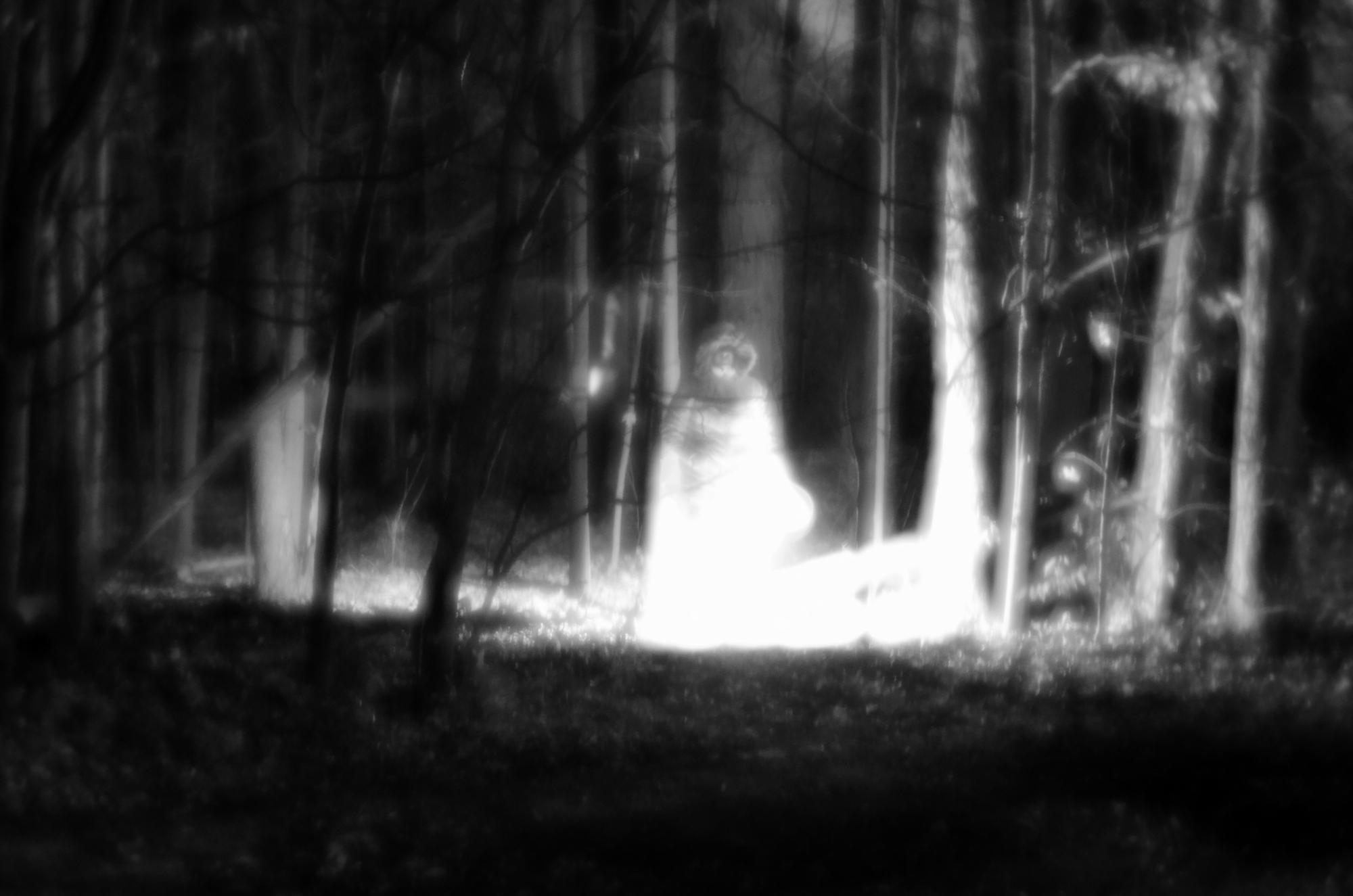 Woods-02 resize.jpg