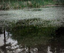 Mtn-pond-1.jpg