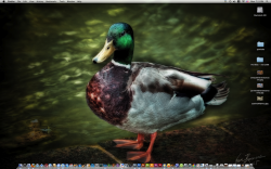 duckdesktop.png