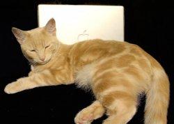 Ginger1.jpg