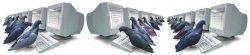 pigeon_system.jpg
