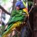 Parrot 75.jpg