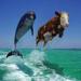 delfin_og_ku.jpg