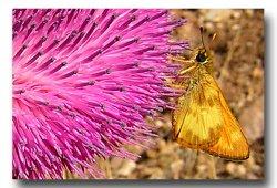 Moth-b-2.jpg