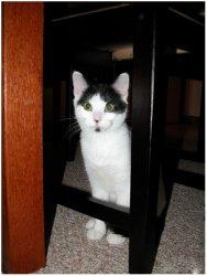 Cats009.jpg