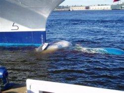 impale-a-whale.jpg