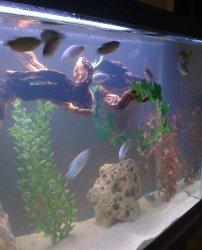 Fish Tank 010.jpg