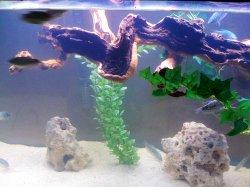 Fish Tank 017.jpg