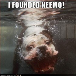 funny-dog-pictures-underwater-found-nemo.jpg
