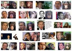 Bush_Monkey.jpg