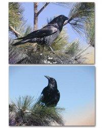Ravens_Combo.jpg