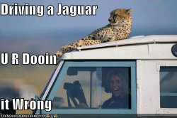 funny-pictures-jaguar-van-woman.jpg