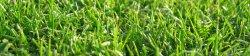 blogbannergrass.jpg