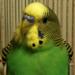 avatar_kiwi.png