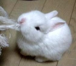 so_cute_rabbit-1.jpg