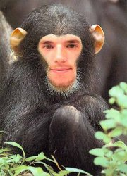 chimpanzeesrule.jpg