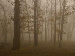 Murky Woods.jpg