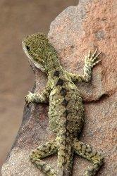 02247_lizard_1.jpg